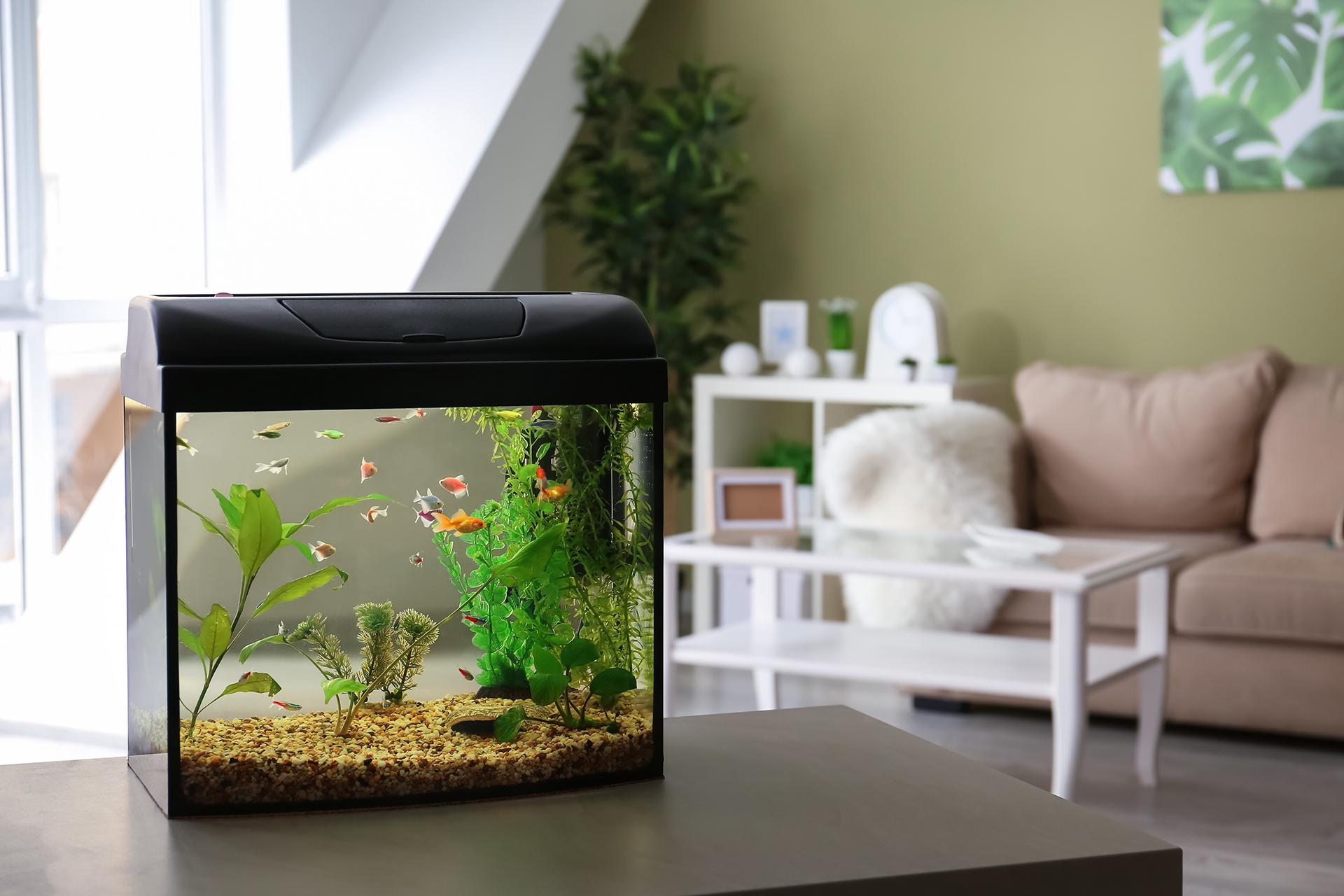 水槽、花瓶などや水回りの近くを避ける